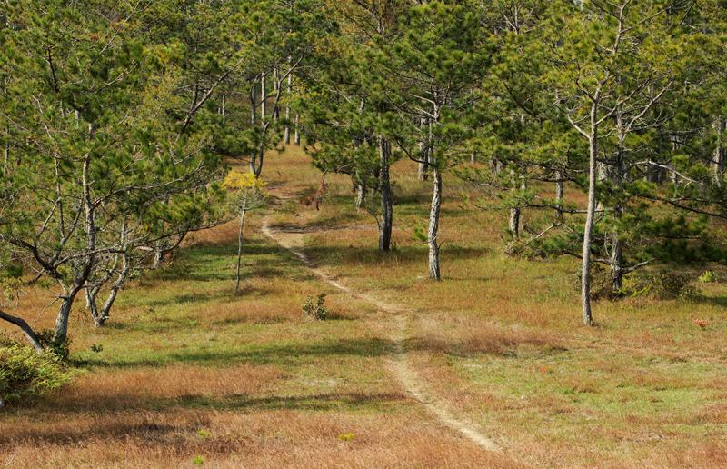 Path through the pine forest  in Valley of Love, Da Lat, Vietnam