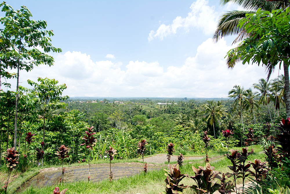 Landscape view from outside of our house on Bali - second floor