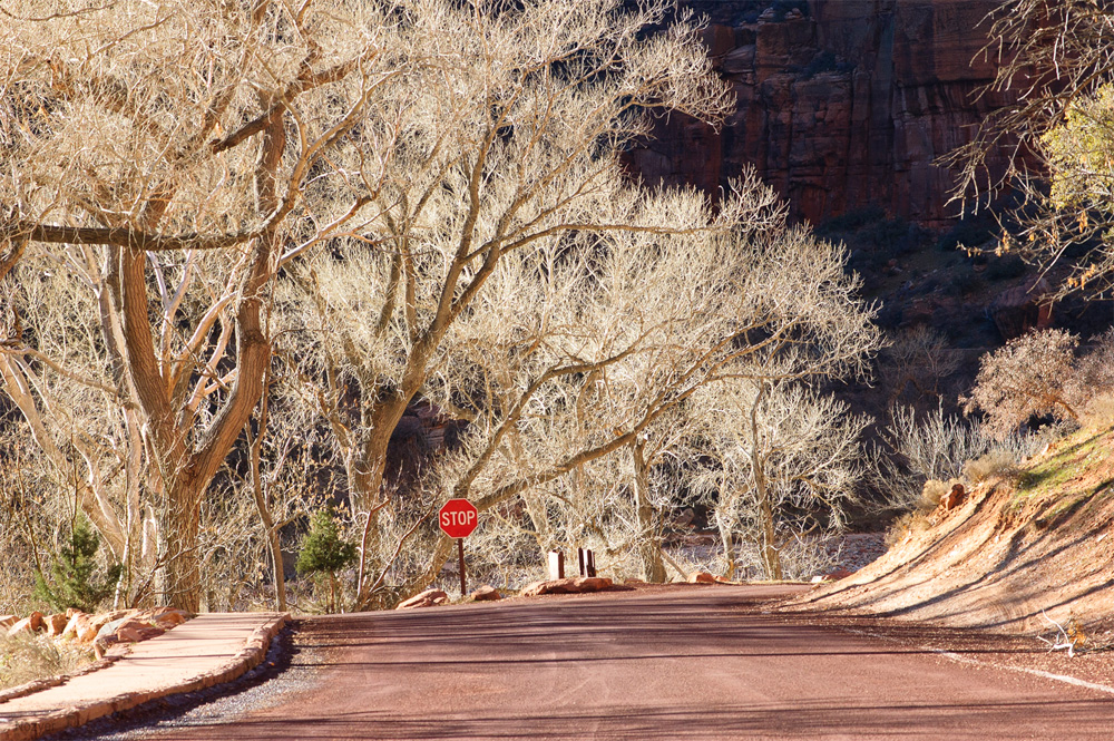 Zion National Park by Marina Nozyer