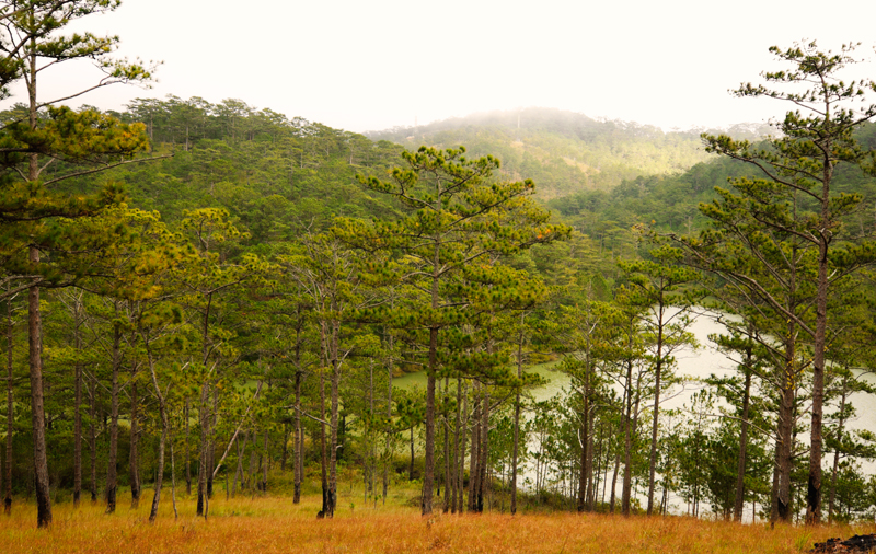 Forest, lake and mountains in Valley of Love, Da Lat, Vietnam
