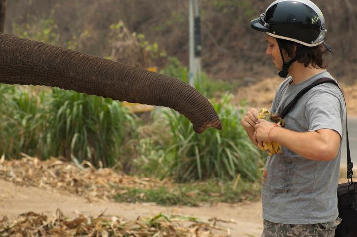 Andrei Verner is giving away bananas to an elephant
